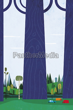 namioty kemping obok ogromnych wysokich drzew
