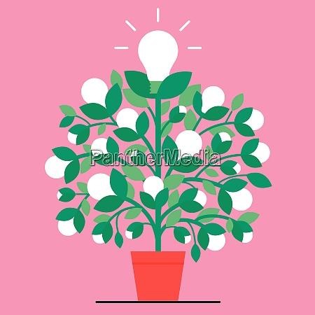 pianta della lampadina