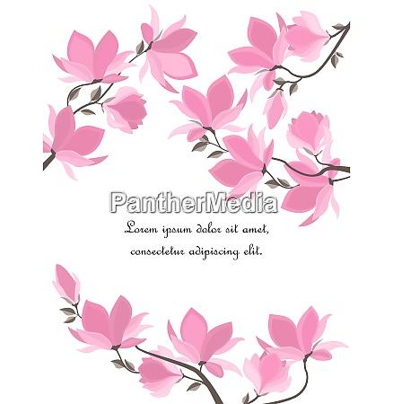 wektorowe kwiaty magnolii