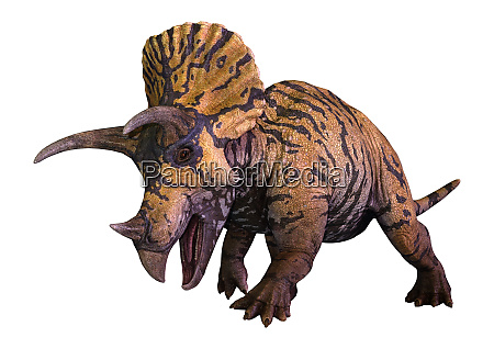 3d rendering of a dinosaur triceratops
