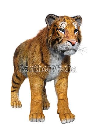 3d rendering big cat tiger on