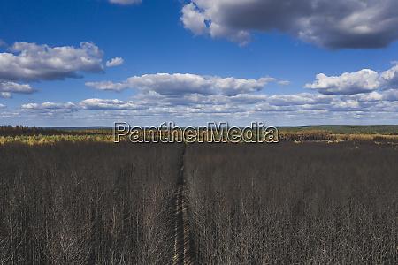 germany brandenburg treuenbrietzen forest after forest