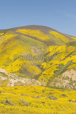 malowniczy krajobraz z zoltym kwiaty rosnacych