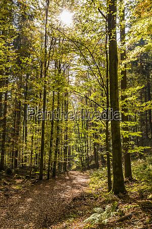germany baden wuerttemberg black forest bad