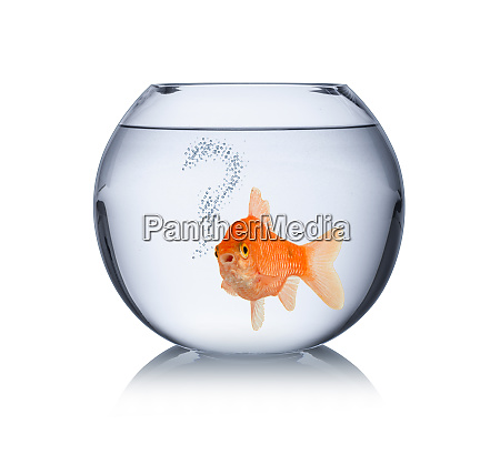 goldfish in bowl with question mark