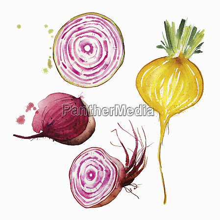 watercolour painting of different beetroot