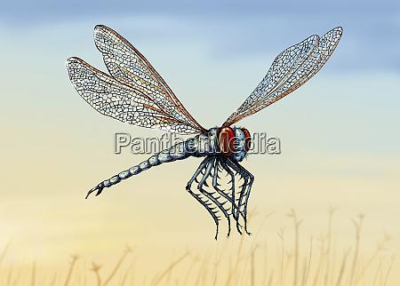 ilustracja wymarlego owadow meganeura
