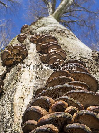 niemcy las bawarski pien drzewa z