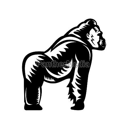silverback goryl widok z boku woodcut