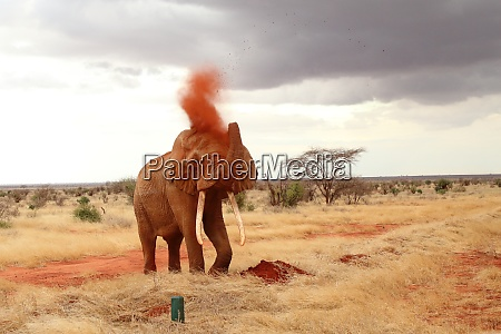 the, mighty, elephant, takes, a, sand - 26933148