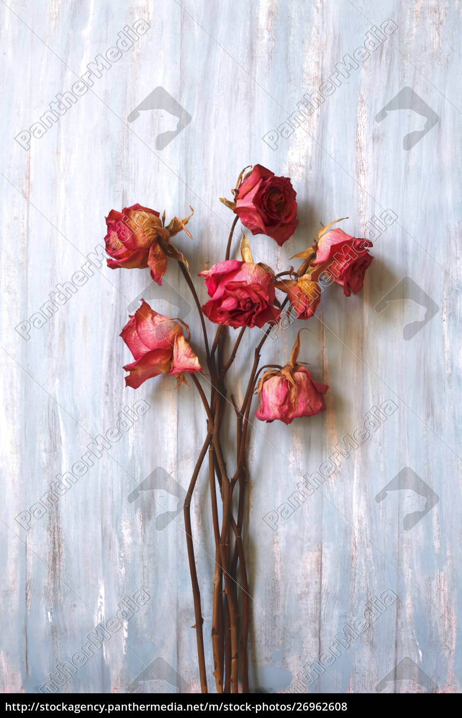 still, life, , dried, roses, on, wood - 26962608