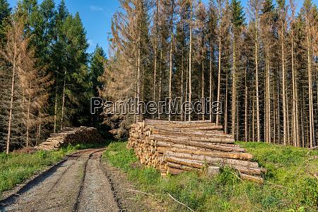 pietrzace sie klody zebranego drewna w