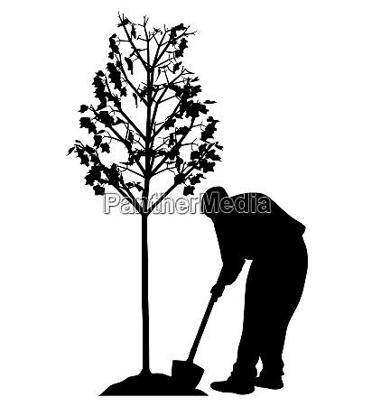 mlody czlowiek sadzenia drzewa