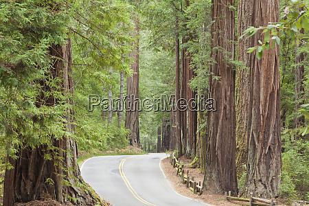 usa california view of road through