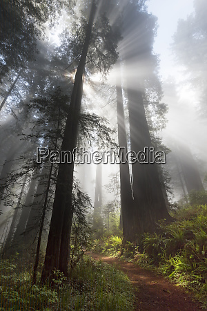 usa california sunlight streaming through the