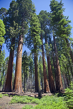sequoia national park california usa