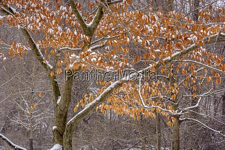 stany, zjednoczone, pensylwania, filadelfia., Śnieg, na, drzewach, w - 27344942