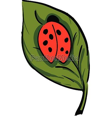a cute little lady beetle crawling