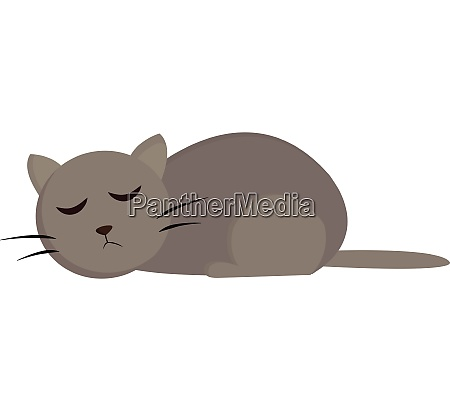 sleeping cat vector or color illustration