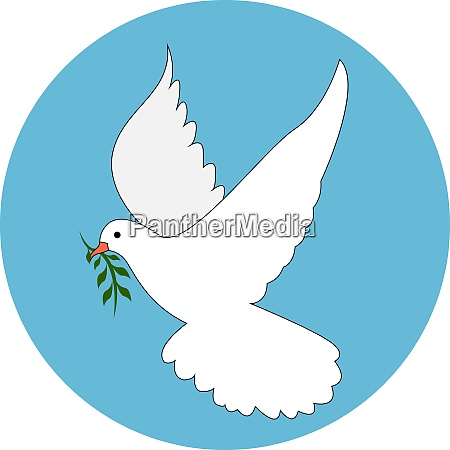 white dove illustration vector on white