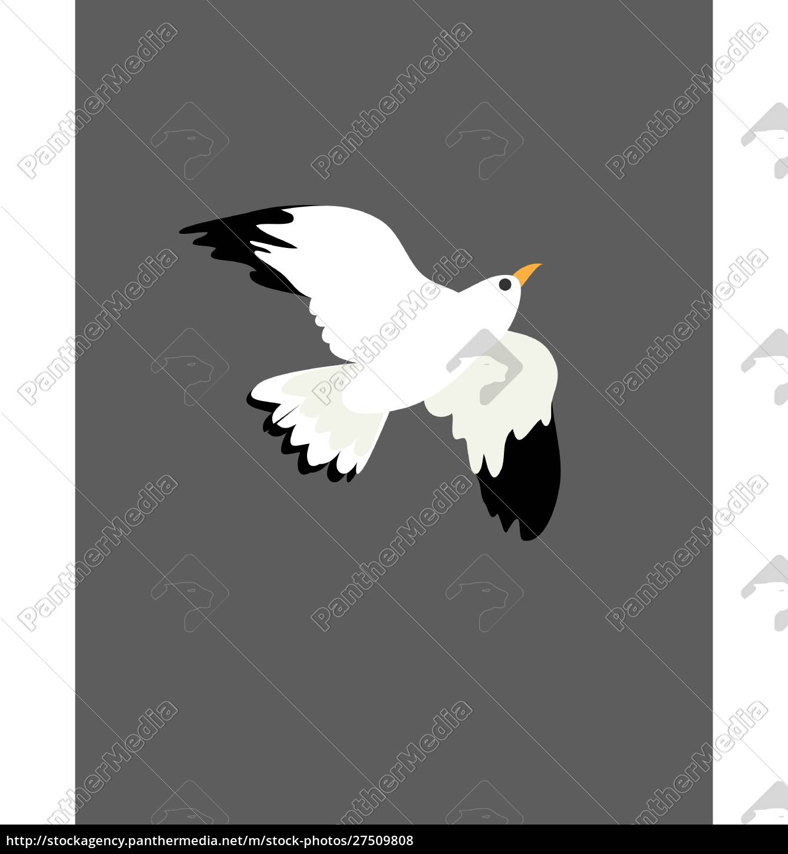 portret, ptaka, mewa, podczas, lotu, wektor, lub, kolor - 27509808