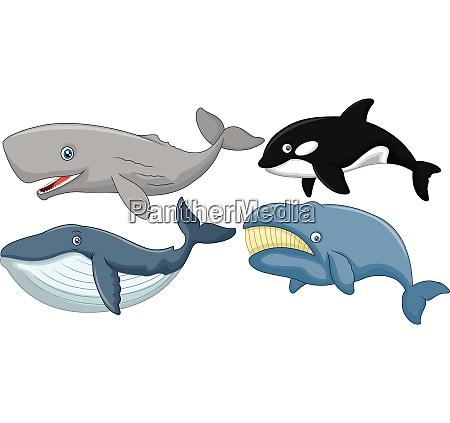 kolekcja wielorybow z kreskowek