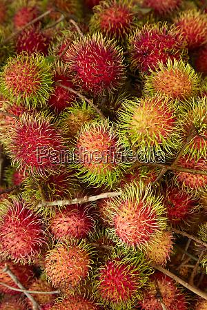 rambutan fruit at can duoc market