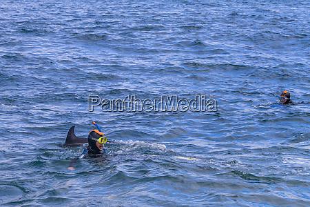 new zealands dusky dolphins lagenorhynchus obscurus