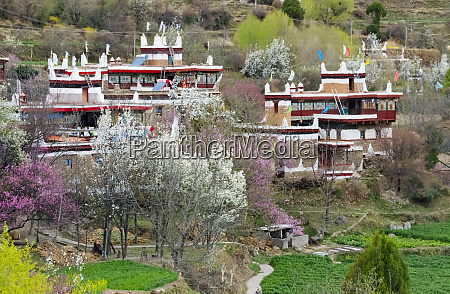 jiaju tibetan village with pear and