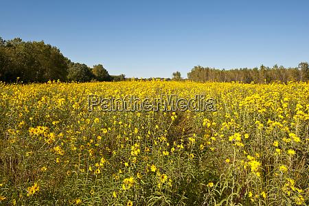 usa minnesota west saint paul field