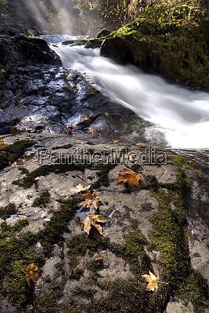 usa oregon sweet creek autumn leaves