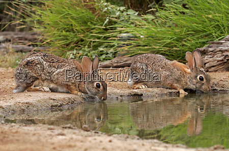 usa texas starr county pair of