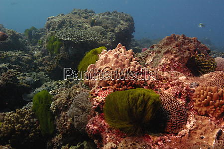 coral reef mixed soft corals and