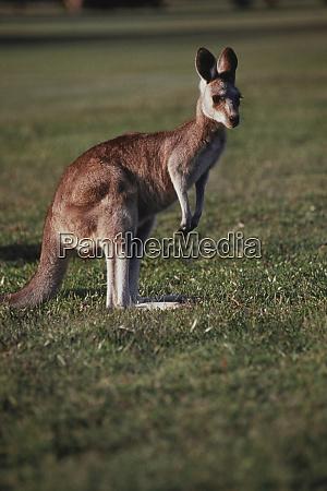australia new south wales yamba golf