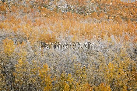 stany zjednoczone kolorado san juan mountains