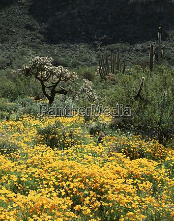 usa arizona organ pipe cactus national