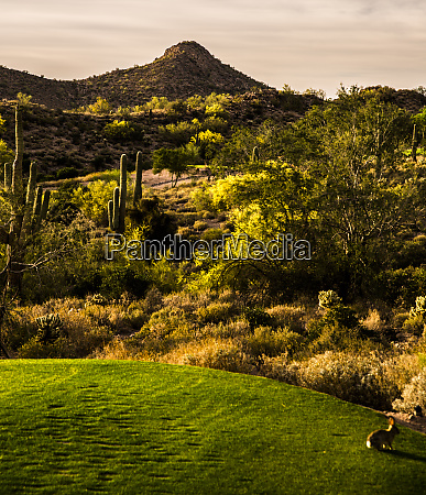 phoenix arizona saguaro cactuss and landscape