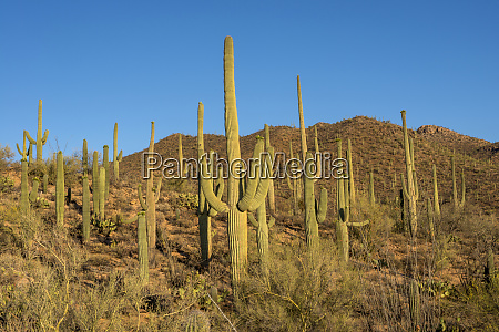 usa arizona tucson saguaro national park