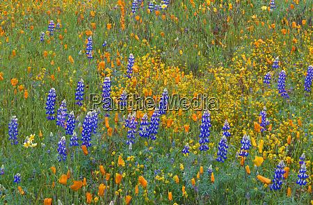 usa california coast range mountains lush