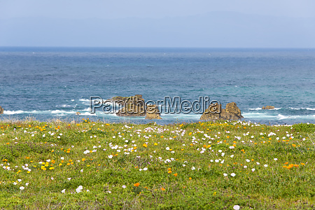 usa california point buchon wildflowers california