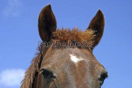 irlandia zblizenie twarzy konia