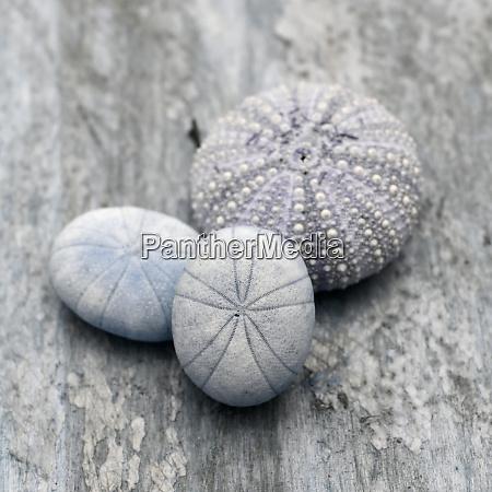 natutical, shell, martwa, natura. - 27888326