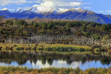 lake mistletoe is one of a