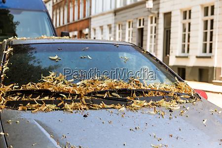 liscie na samochodzie ulica w prowincjonalnym