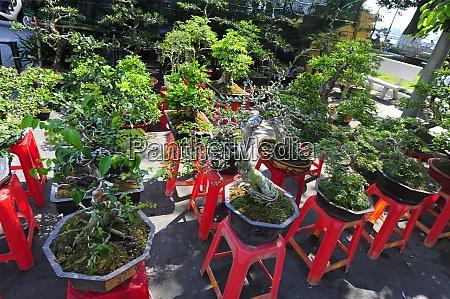 kultura bonsai w wietnamie