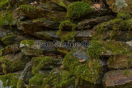 mech na kamieniach w lesie