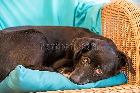 odpoczynek dla psa zblizenie