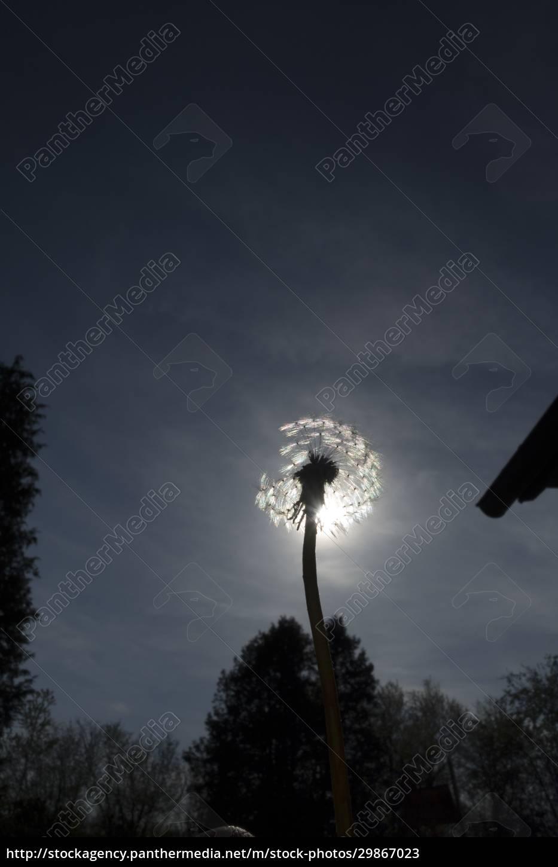światło, jako, siła, życiowa, w, przyrodzie - 29867023