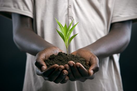 African Descent, African Ethnicity, Agriculture, Boy, Care, Concepts - D10260506