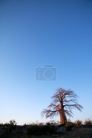 Nr. zdjęcia B56611899